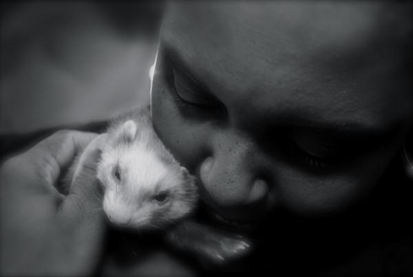 00_-_Pets
